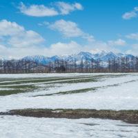 エゾリス君も感じる春の陽気・・みるみるうちに雪どけが進みます。