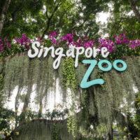 2018シンガポール&沖縄の旅(2)セントーサ島とシンガポール動物園