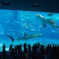 2018シンガポール&沖縄の旅(5)北谷から沖縄美ら海水族館へ