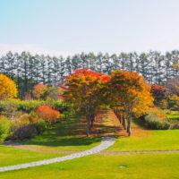 秋深まった美術村庭園と新札内丘陵からポロシリ岳