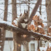 雪の中で夏休み?11/26(月)~12/14(金)休館します。