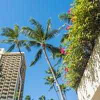 2018常夏の楽園ハワイ(ホノルル・オワフ島)へvol.1~実は初めての〇〇〇~
