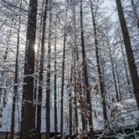 """4月ですが・・カラマツ林が雪化粧""""スノードロップ""""は開花。"""