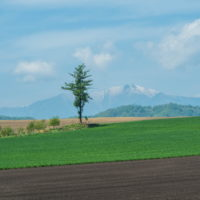 5月お気に入りの風景~残雪の日高山脈と新緑の丘陵地~