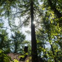 新緑の5月、初夏を通り越し・・中札内村でも37℃の猛暑日に!