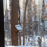 マイナス17℃、霧氷の木々を駆け回るエゾリス君。