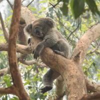 2019メルボルン・タスマニア・シドニーvol.14~フェリーでタロンガ動物園~