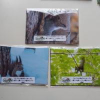 """最新版""""エゾリス君ポストカードvol.12""""が完成、そして販売中!"""