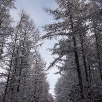 遅い初雪から・・いきなり真冬の中札内村。