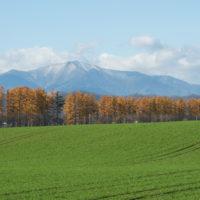 カラマツの紅葉真っ盛り・・中札内村11月の農村風景
