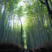 2020秋の京都&沖縄離島めぐりvol.2~紅葉の嵯峨野と京懐石~