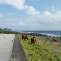 2020秋の京都&沖縄離島めぐりvol.5~最西端の秘島・与那国島~