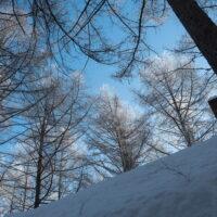 美しい朝の光景~カラマツのてっぺんが霧氷に~