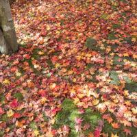 いよいよ晩秋へ。中札内美術村の最終日、相原求一朗美術館へ。